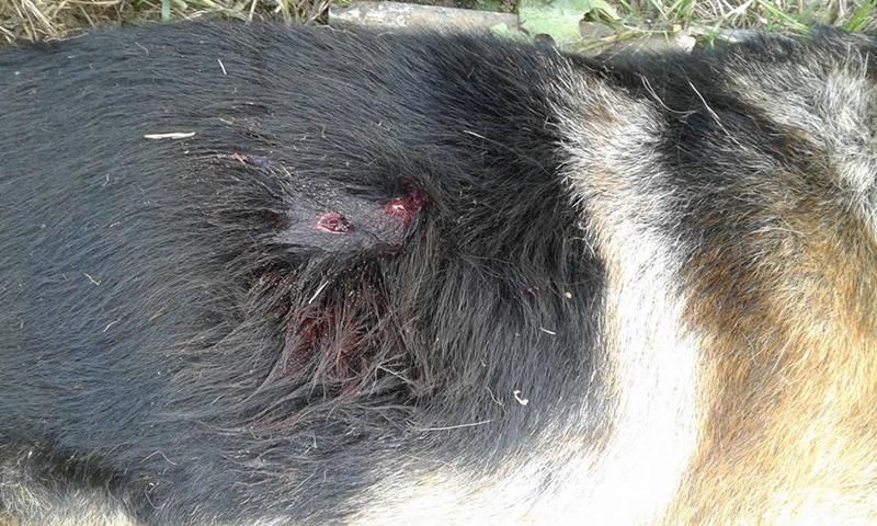 En confuso hecho un almacenero dio muerte a un perro de una periodista de Bella Unión